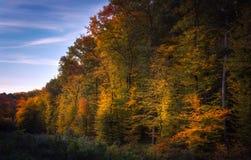 Деревья осени в лесе с голубым небом Стоковые Изображения