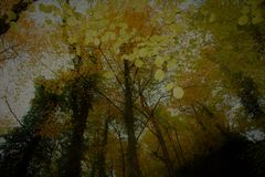 Деревья осени в лесе Стоковые Фотографии RF
