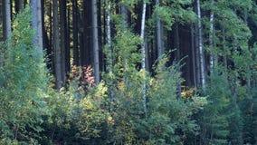 Деревья осени в лесе акции видеоматериалы