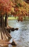 Деревья осени в парке города. Ландшафт. Стоковые Изображения RF