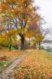 Деревья осени в парке Стоковая Фотография