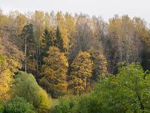 Деревья осени в парке Стоковые Изображения RF