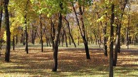 Деревья осени в парке сток-видео