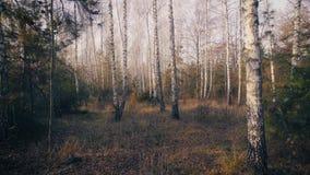 Деревья осени в следе предпосылки леса внутри видеоматериал