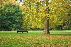 Деревья осени в cornor Kensington паркуют в Лондоне стоковые фото