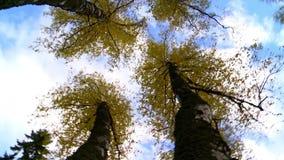 Деревья осени завихряются вокруг