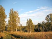 Деревья осени и голубое небо Стоковая Фотография RF