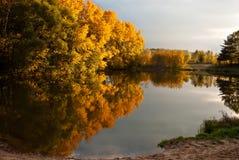 Деревья осени и их отражение Стоковые Фото