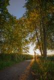 Деревья осени и малый мост на заходе солнца стоковые изображения rf