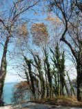 Деревья осени и море Стоковое фото RF