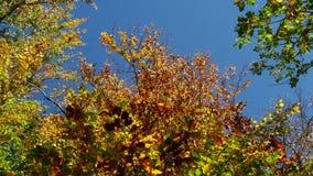 Деревья осени и небо ясности голубое акции видеоматериалы