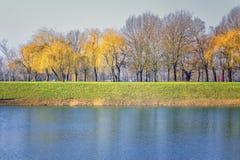 Деревья осени и озеро стоковая фотография rf