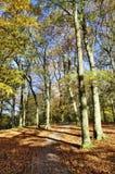 Деревья осени на парке страны Talkin Tarn Стоковая Фотография