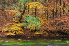 Деревья осени над рекой Стоковое фото RF