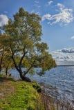 Деревья осени на речном береге Стоковые Изображения RF