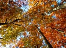 Деревья осени от детали нижнего взгляда Стоковые Фотографии RF