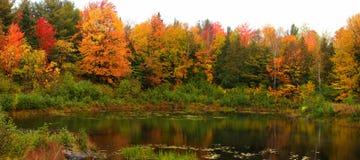 Деревья осени прудом стоковое фото