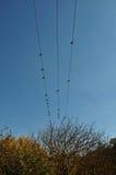 Деревья осени птиц голубя Стоковая Фотография RF