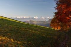 Деревья осени со швейцарскими горными вершинами стоковое изображение