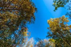 Деревья осени с голубым небом in-between стоковые изображения rf