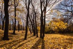 Деревья осени с желтым цветом выходят земле голубое небо Стоковое фото RF