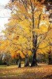 Деревья осени с листьями на том основании стоковое фото