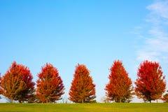 Деревья осени Стоковое Изображение RF