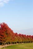 Деревья осени Стоковые Фотографии RF