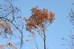 Деревья осени Стоковые Изображения