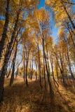 Деревья осени Стоковое Фото