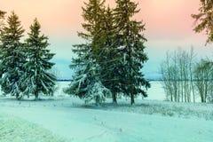 Деревья острословия поля Snowy Стоковое Изображение RF