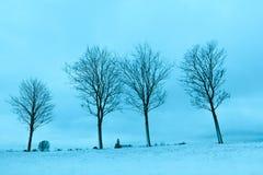 Деревья острословия поля Snowy Стоковые Фото