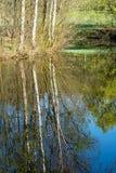 Деревья отраженные в озере Стоковое Изображение RF