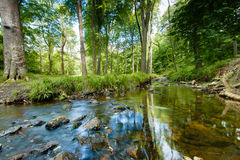 Деревья отраженные в потоке Стоковые Изображения
