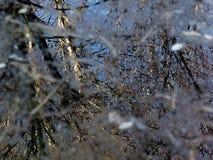 Деревья отраженные в пруде Стоковое Фото