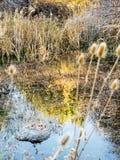 Деревья отраженные в пруде Стоковые Фотографии RF