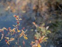 Деревья отраженные в пруде Стоковые Изображения RF