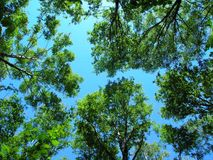 Деревья от дна вверх стоковые изображения rf