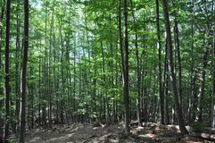 Деревья от леса горы стоковое фото