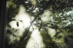 Деревья от окна стоковое фото