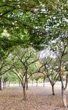 Деревья падения в парке после наступления темноты стоковое изображение