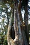 Деревья парка 007 El Ejido Стоковые Фотографии RF
