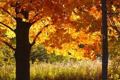 Деревья падения Мичигана стоковые фото