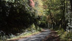 Деревья падения с падать листьев акции видеоматериалы