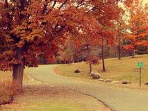 Деревья падения Стоковая Фотография