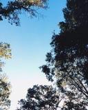 Деревья падения Стоковая Фотография RF