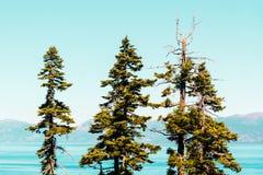 Деревья перед изумрудными заливом и Лаке Таюое стоковая фотография