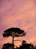 Деревья перед небом вечера Стоковое фото RF