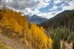 Деревья поворачивая цвета в Silverton Колорадо вдоль привода горизонта стоковая фотография