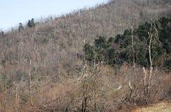 Деревья поврежденные гололедью Стоковые Изображения